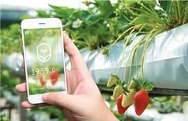 """Giải pháp VNPT Smart Agri: """"Cánh tay phải"""" của nông dân thời 4.0!"""