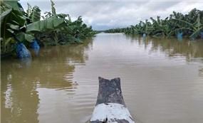 """Ông Trời lại làm khó HAGL Agrico: 1.500 ha cây ăn trái ngập lụt trong """"hiện tượng thời tiết bất thường chưa từng xảy ra tại Lào"""""""