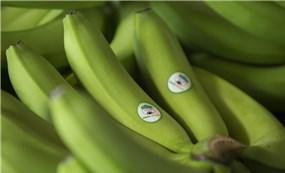Doanh thu trái cây tăng mạnh, HNG đã có lãi trở lại